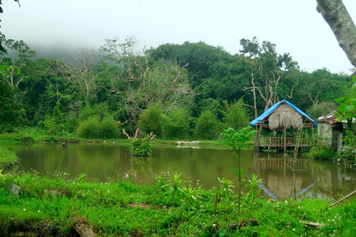 Nhất Lâm Thủy Trang Trà - địa điểm du lịch hoang sơ tại Đà Nẵng