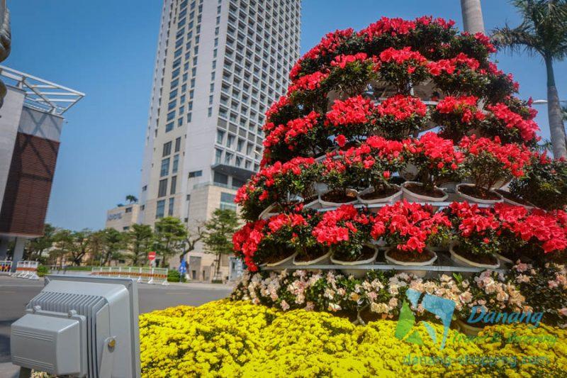 http://danang-shopping.com/wp-content/uploads/2018/02/duong-hoa-tet-da-nang-xuan-nam-moi-4-800x533.jpg